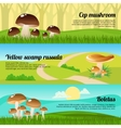 Forest Mushrooms Banners Set vector image