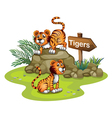 Two tigers with a wooden arrow board vector image vector image