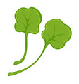 green fresh small leaves vector image
