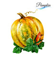 Watercolor pumpkin vector image