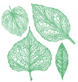 green leaf silhouettes set vector image