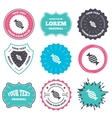 Candy icon Sweet food sign vector image