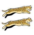 Jumping Leopard vector image