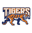 tiger in sport mascot style vector image