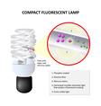 How do CFLs work vector image vector image