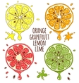 Fresh fruits slices Lemon and lime orange vector image