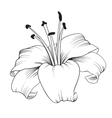 Blooming lily vector image