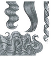shiny long grey fair straight and wavy hair curls vector image