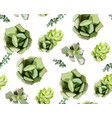 seamless pattern of green colorful succulent vector image