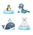 Set of cartoon arctic animals a navy seal vector image