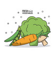 Colorful poster fresh vegetables peas mushrooms vector image