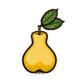 hand drawn colored sketch fruit pear isolated vector image