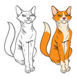 red haired pretty cat sitting vector image