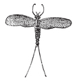 Mayfly vintage engraving vector image vector image