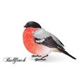 Christmas bullfinch bird vector image