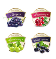 Organic Berries Labels Collection vector image