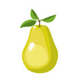 white background with realistic pear fruit vector image