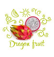 doodles around dragon fruit vector image