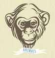 Hand drawn portrait of monkey chimpanzee vector image vector image