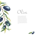 Watercolor olive branch background vector image