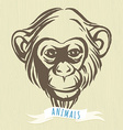 Hand drawn portrait of monkey chimpanzee vector image