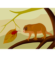 lemur gazing at a beetle vector image