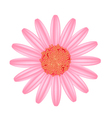 Old Rose Daisy Flower on A White Background vector image