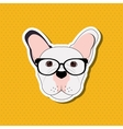 french bulldog design pet and animal concept vector image