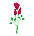 Beautiful red rose vector image