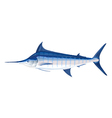 Blue marlin fis vector image
