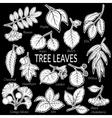 Leaves of Plants Pictogram Set vector image