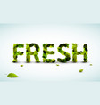 fresh lettering vector image