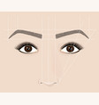 classical shape of eyebrows microblaining and vector image