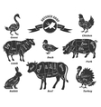 Diagrams for butcher shop vector image