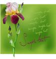 beautiful flower iris vector image