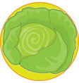 cabbage graphic vector image vector image