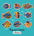 decorative tropical fishes set colorful vector image