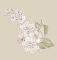 white cherry blossom flowers vector image