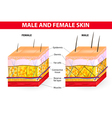 Skin male and female vector image vector image