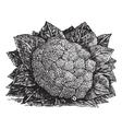 Broccoli vintage engraving vector image