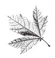 Distress Leaf Texture vector image vector image