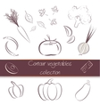 Contour vegetables super pack vector image