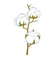 cotton brunch vector image