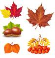 Vintage Autumn Set vector image