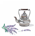 Vintage Kettle and lavender provence style vector image