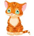 Cute Tabby Kitten vector image