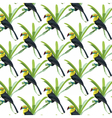 Toucan birds pattern vector image