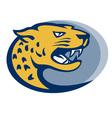 Leopard panther big cat head vector image