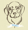 Hand drawn portrait of dog labrador vector image vector image