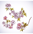 Blossoming sakura decorative elements vector image